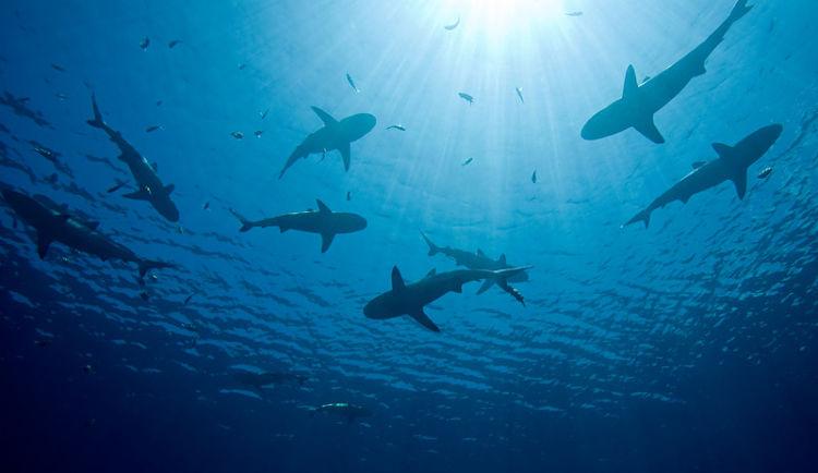 ¡Los tiburones podrían quitarte internet!